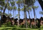 Refugio del Bosque - II